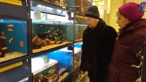 Papildome akvariumą