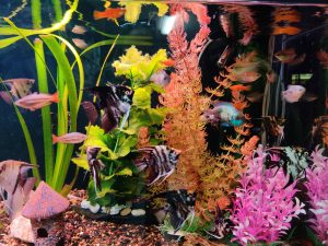 Nauji akvariumo gyventojai