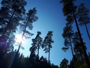 Rudenėjančiame miške